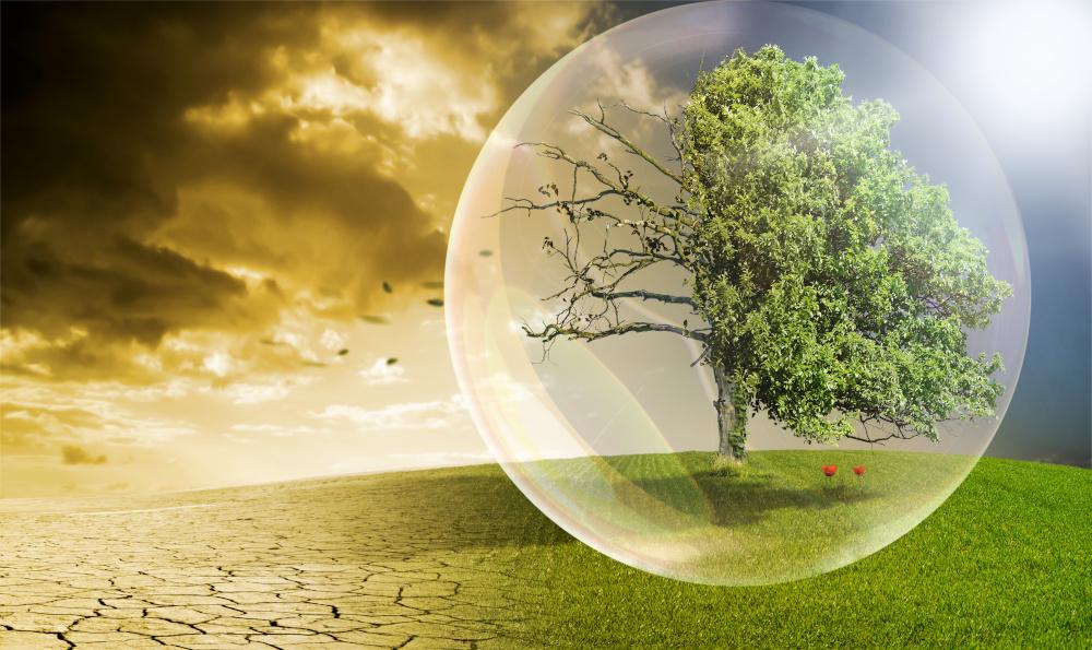 drzewo w oslonce unikajace zanieczyszczen srodowiska
